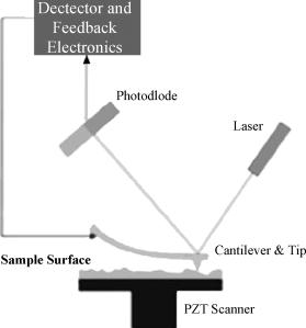 Skema ilustrasi prinsip dasar AFM