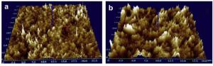 Profil 3D dua membran yang tersumbat: (A) dari reaktor thermofilik, (B) dari reaktor mesophilik
